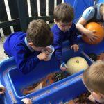 Reception - exploring Pumpkins