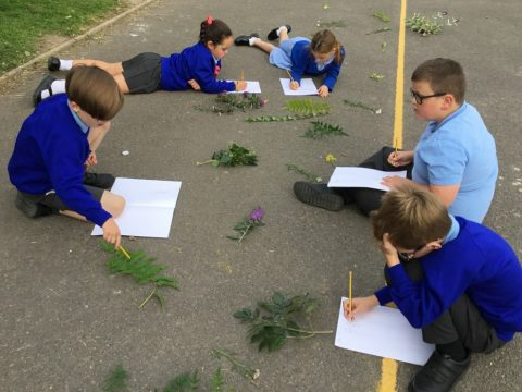 Science - Drawing Plants